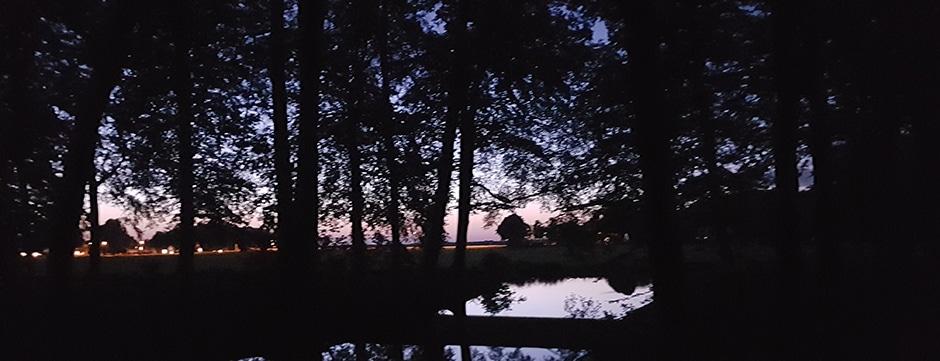Nachtloop in het bos: magisch mooi