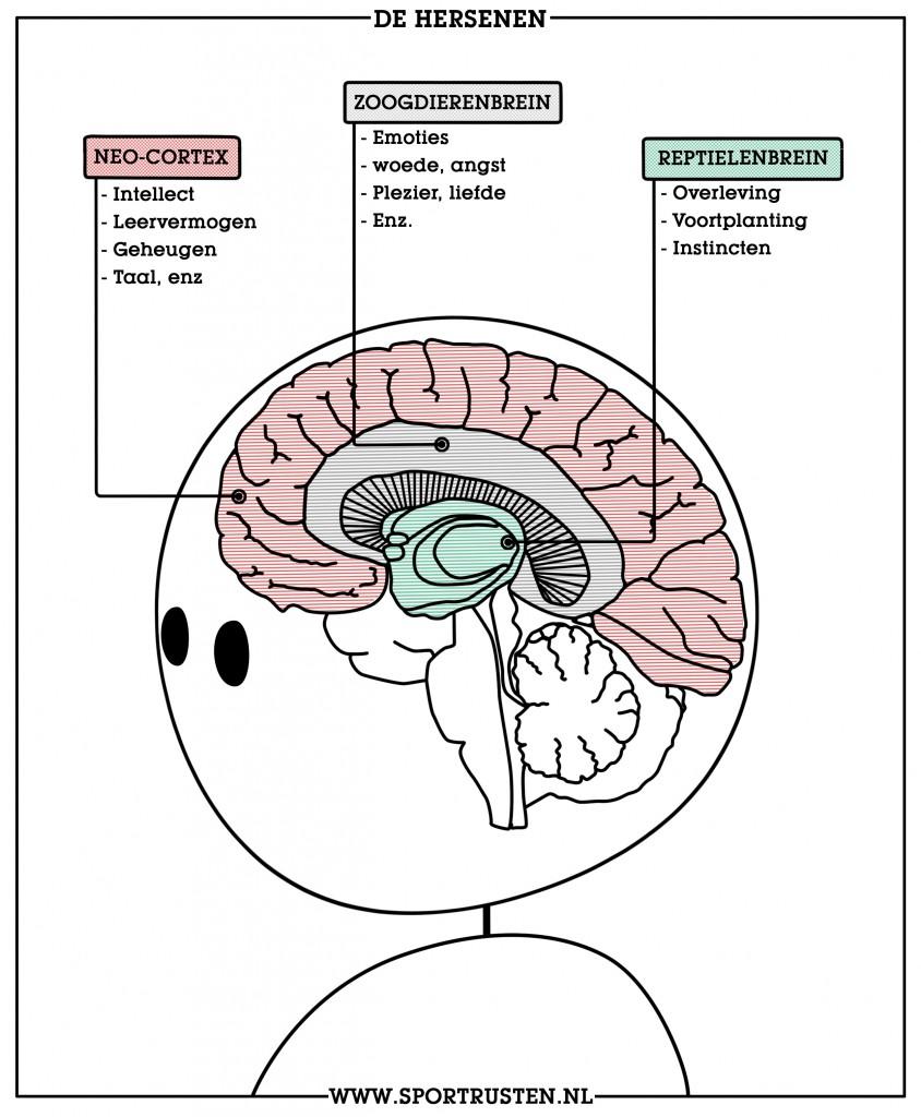 Brein en hardlopen